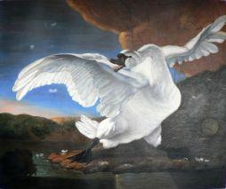 Swan Jan Asselijn
