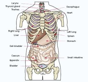 a_09 organs
