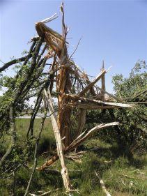 boom-geexplodeerd-door-bliksem