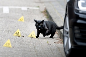 2015-06-09 00:00:00 ZAANDAM - Een zwarte kat op de plek waar de Amsterdammer Lucas Boom is geliquideerd. De schietpartij was op de J. Kruijverstraat. De naam van Boom wordt genoemd in verband met veel criminele zaken, maar tot een veroordeling in een heel grote zaak is het nooit gekomen. Over Boom wordt ook gezegd dat hij een vertrouweling was van Willem Holleeder. ANP OLAF KRAAK